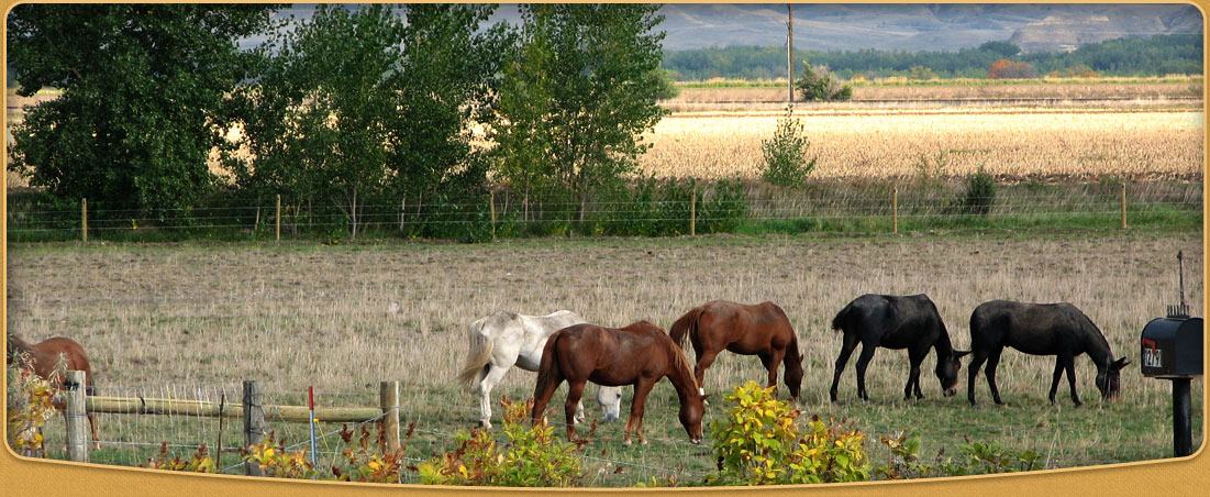 Ranch - Beagle Properties